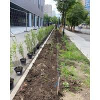 Пример городского озеленения г. Реутов