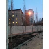 "Сквер Маяковского ""Солнце"""