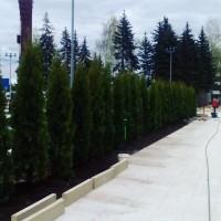 Озеленение центральной площади в городе Клин, московская область